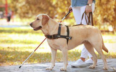 14° Giornata Nazionale del cane guida – Lecce, 16 ottobre 2019